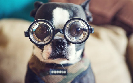 Mind Blowing Facts About Dogs | All About Pet Accesories | Scoop.it