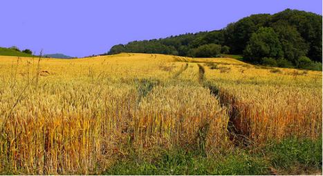 Agroécologie: la France à l'initiative du réseau européen sur les MAEC | ECOLOGIE BIODIVERSITE PAYSAGE | Scoop.it