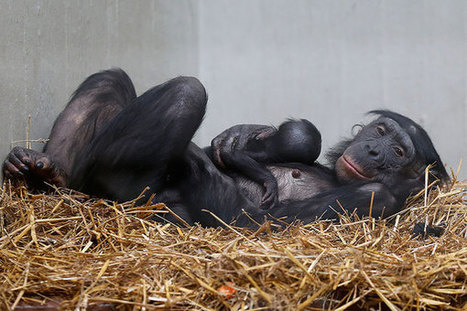 Animal smarts: A Q&A with primatologist Frans de Waal | Empathy and Animals | Scoop.it