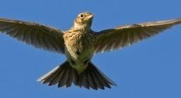 Nimmt die EU-Feldvogelpopulation durch intensive Landwirtschaft ab? | Agrarforschung | Scoop.it