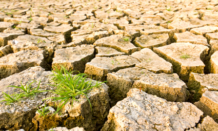 Reports Affirm Climate Change Could Lead to Drastic Increases In Food Prices   EcoWatch   EcoWatch   Scoop.it