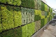 Le mur végétal : conception, réalisation et entretien.   culture hors-sol   Scoop.it