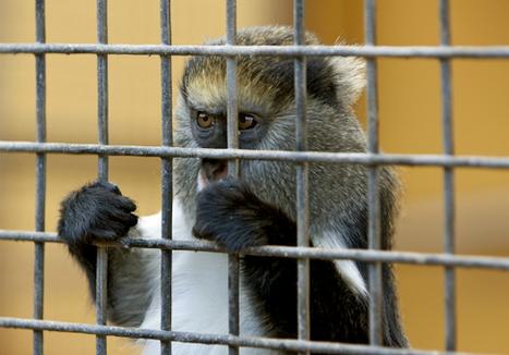 Norway Creates Animal Rights Police | GarryRogers Biosphere News | Scoop.it