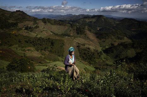 Myanmar Returns to What Sells: Heroin | Mrs. Watson's Class | Scoop.it