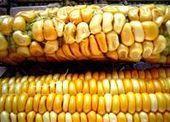 Un estudio reciente afirma que el maíz transgénico es tóxico | Ingeniería en Molineria | Scoop.it