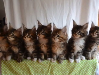 Gigglebit: Seven kittens watch object in sync - Siliconrepublic.com | Cats | Scoop.it