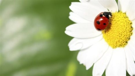 La fleur et la séduction   EntomoScience   Scoop.it