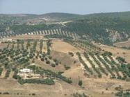 Land Tenure | UNDP | BioFuels - Agriculture & Oil Trees | Scoop.it