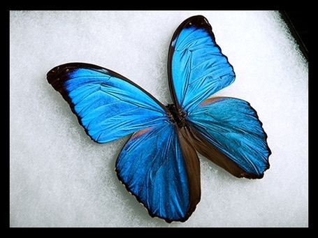 How Butterfly Wings Can Inspire New High-Tech Surfaces | Science News | Scoop.it