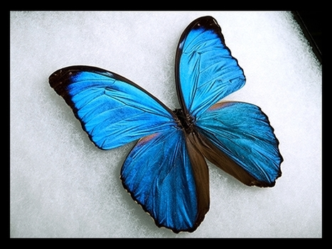 How Butterfly Wings Can Inspire New High-Tech Surfaces   mechi-giralt   Scoop.it