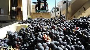 Cette année, les vignerons touchés par des sinistres climatiques vont pouvoir acheter de la vendange | Le Vin et + encore | Scoop.it