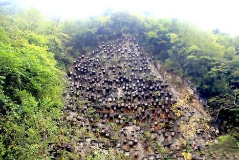 Chinese Beekeepers Actually Have a Good Reason for Hanging Hundreds of Beehives Off a Cliff | Strange days indeed... | Scoop.it