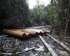 3 Ways to Achieve Zero Tropical Deforestation by 2020 | WRI Insights | Sustain Our Earth | Scoop.it