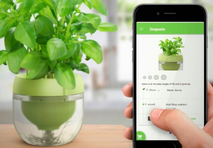 Grow a mess-free garden on your windowsill | Garden apps for mobile devices | Scoop.it