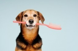 Brush Your Dog's Teeth to Prevent Serious Health Problems | i Love Dogs | Pets Decisions | Scoop.it