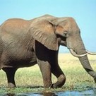 Kenya loses over 1000 elephants in 4 years due to poaching and droughts | Rhino poaching | Scoop.it
