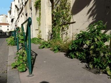 Sous le pavé, les fleurs - Métropolitiques | Horticulture urbaine et périurbaine | Scoop.it