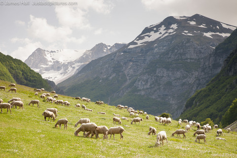 Sheep and dogs in the Monti Sibillini | Le Marche another Italy | Scoop.it
