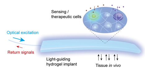 Hydrogel implant enables light-based communication with cells inside the body | KurzweilAI | Longevity science | Scoop.it