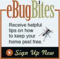 Atlanta Pest Control & Termite Services - Marietta, Georgia | HomeTeam | Pest Control Marietta | Scoop.it