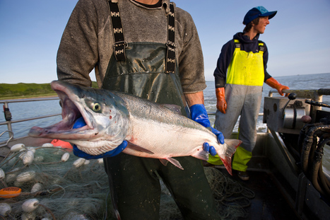 Fishers of Nation's Largest Salmon Run Fight Proposed Mine | Food issues | Scoop.it