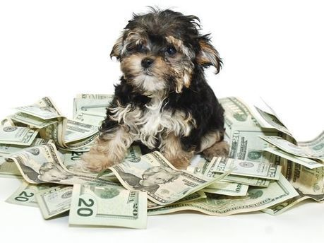 This is how much it really costs to own a dog per year | Kickin' Kickers | Scoop.it