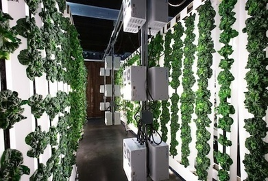 US: Bright Agrotech launches ZipFarm for indoor growers | Vertical Farm - Food Factory | Scoop.it