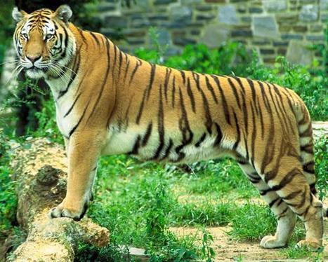 Golden Triangle Tiger Tour   Golden Triangle Tiger Tour Package   Scoop.it