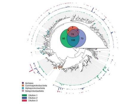 Loss in microbial diversity affects nitrogen cycling in soil   EcoFINDERS -  Science for a sustainable use of soils   Scoop.it