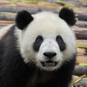 Panda problems? Improve your web content quality - Brafton | Copywriting | Scoop.it