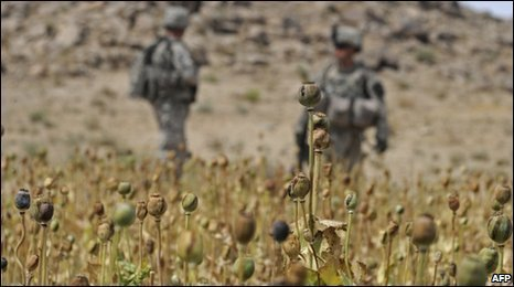 New poppy blight poised to boost opium price | Agricultural Biodiversity | Scoop.it