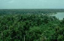 Biomas del mundo: Los Bosques Tropicales | BIOMAS | Scoop.it