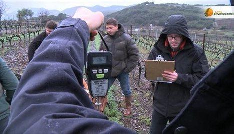 Comment réduire l'usage des pesticides dans les vignes ? | Les colocs du jardin | Scoop.it