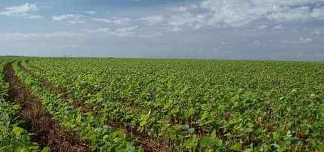 Soja : le retour du soja français - Agro Media | Actualité de l'Industrie Agroalimentaire | agro-media.fr | Scoop.it