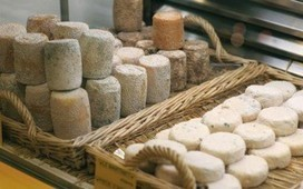 Treize fromages de la région sacrifiés par le Gouvernement ? | The Voice of Cheese | Scoop.it