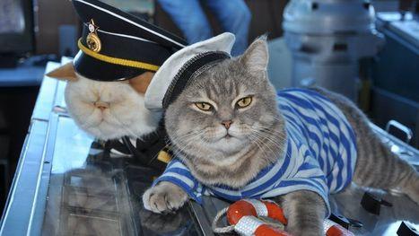 Meet the cat captain and first mouser of your Russian river cruise | La Boîte à Idées d'A3CV | Scoop.it