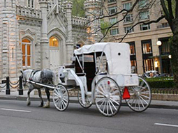 Animal Rights Activists Want Protections Enforced For Downtown Carriage Horses - CBS Chicago | Animals R Us | Scoop.it