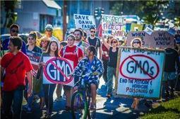 Opposition to GMO foods Grows in Hawaii | YOUR FOOD, YOUR ENVIRONMENT, YOUR HEALTH: #Biotech #GMOs #Pesticides #Chemicals #FactoryFarms #CAFOs #BigFood | Scoop.it