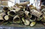 Afrique- Trafic d'ivoire : mafias et groupes armés font un carnage   Actualités Afrique   Scoop.it