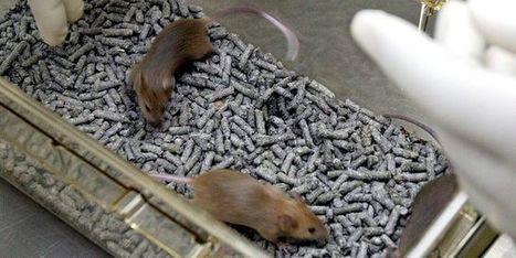 Vivre plus longtemps en tuant les vieilles cellules | EntomoScience | Scoop.it
