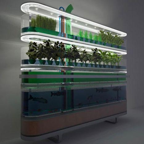 Pinterest | Aquaponics~Aquaculture~Fish~Food | Scoop.it