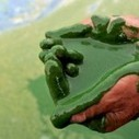 Algae converted to crude oil in less than 1 hour | Economics | Scoop.it