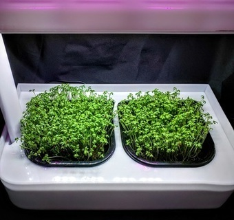 MicroFarm Line Now on Limited Time Sale !!! | Vertical Farm - Food Factory | Scoop.it