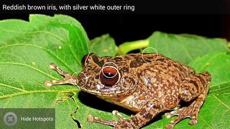 Mobile app to identify frogs | Ecoideaz.com | Scoop.it