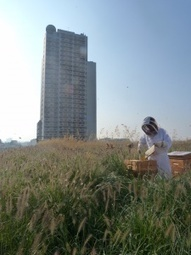 Biodiversité : Paris lance son plan ruches –  – Environnement-magazine.fr | Damien CADOUX | Scoop.it