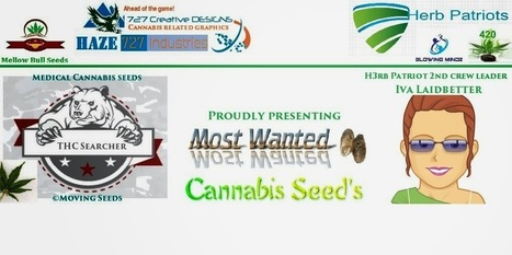 Most Wanted Seeds by Influx Genetics. | Most Wanted Seeds at Influx Genetics on tour. | Scoop.it