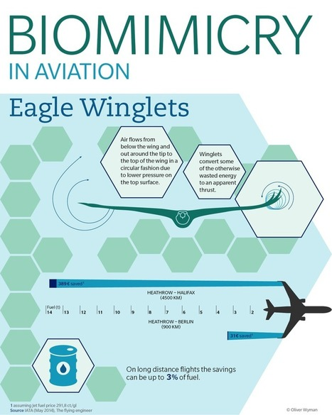 Eagle's Wings Inspire More Fuel Efficient Planes | Biomimicry | Scoop.it