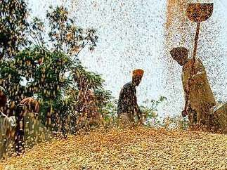 The story behind India's missing wheat stock | WHEAT | Scoop.it
