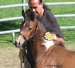 Équitation éthologique | Djinn-arabians | éthologie équine | Scoop.it