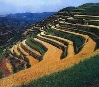 Showcase of 30+ Beautiful-Terrace-Farming   PSDtoHTMLHINT   TechPilesGEO   Scoop.it